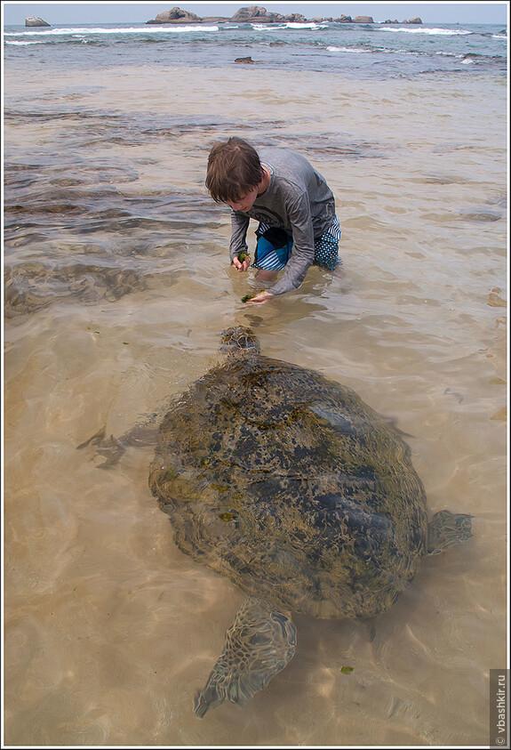 Рядом к берегу утром приплывают черепахи, чтобы покормиться у туристов водорослями )