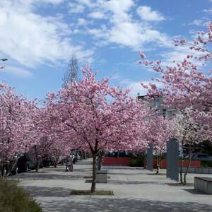 Весна в Анси