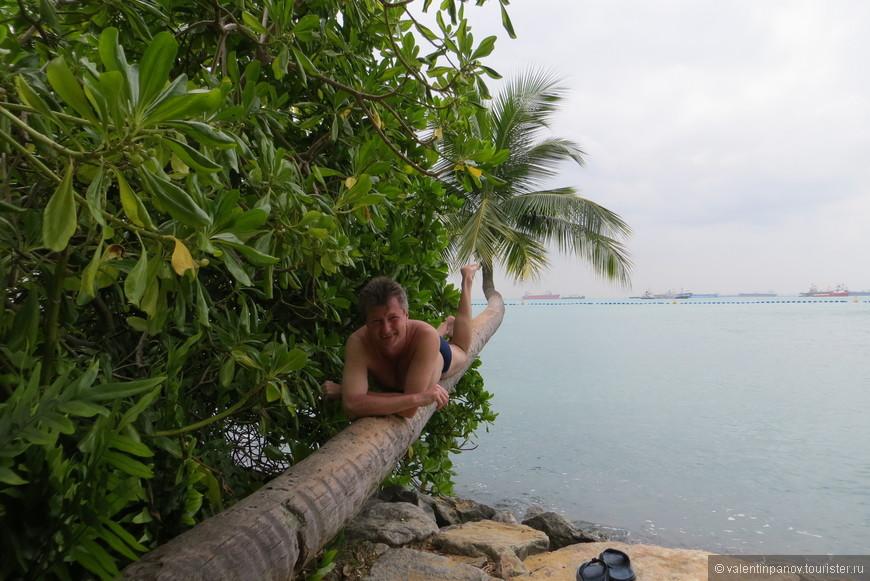 В мангровых зарослях на банановом дереве... Это ли не кайф?