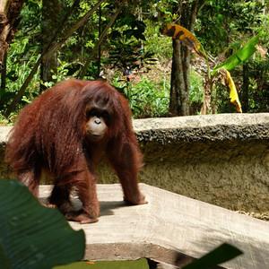 Флора и фауна Борнео. Lok Kawi Wildlife Park