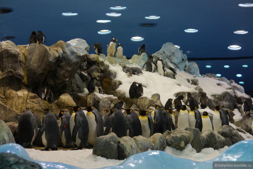 пингвинятник в лоропарке