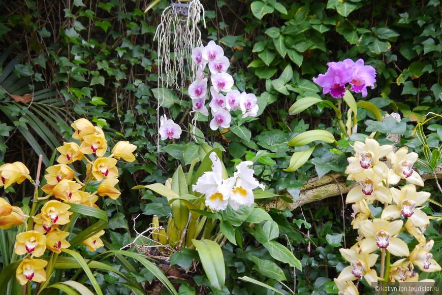 выставка орхидей в лоропарке
