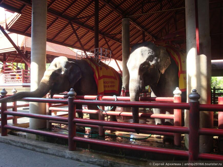 На слонах можно покататься и покормить бананами