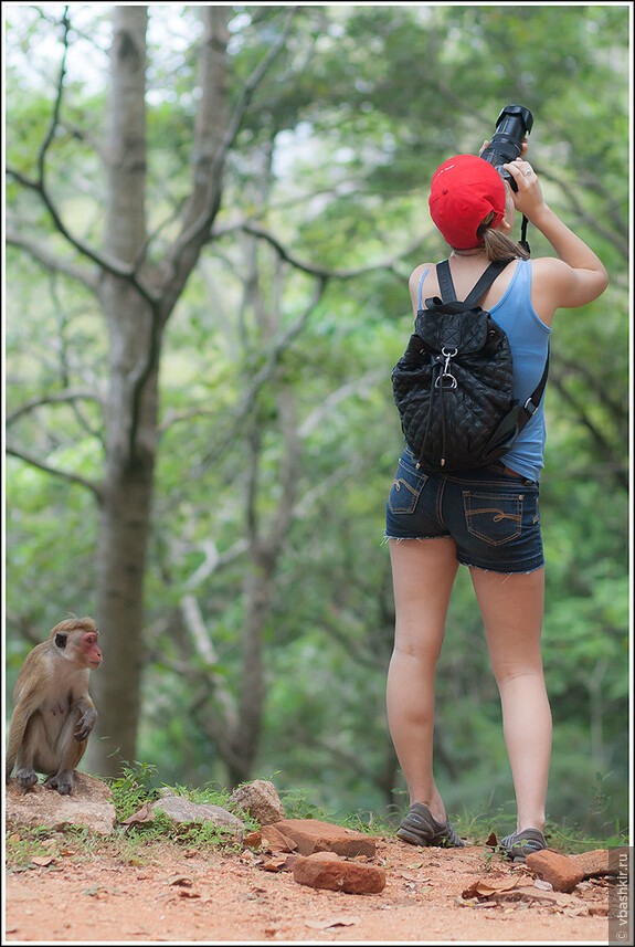 Где же эти обезьяны? Наверное, спрятались высоко в ветвях!