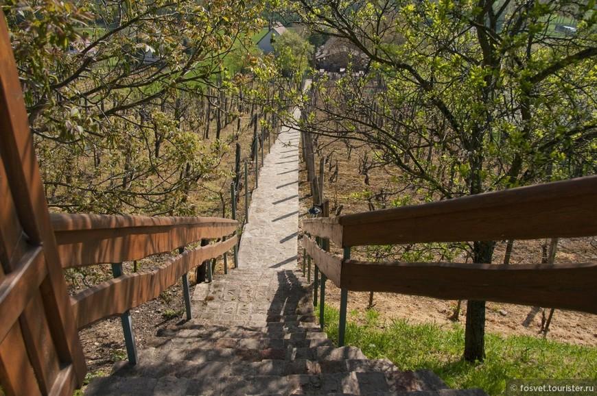 виноградники на горе Эгреди