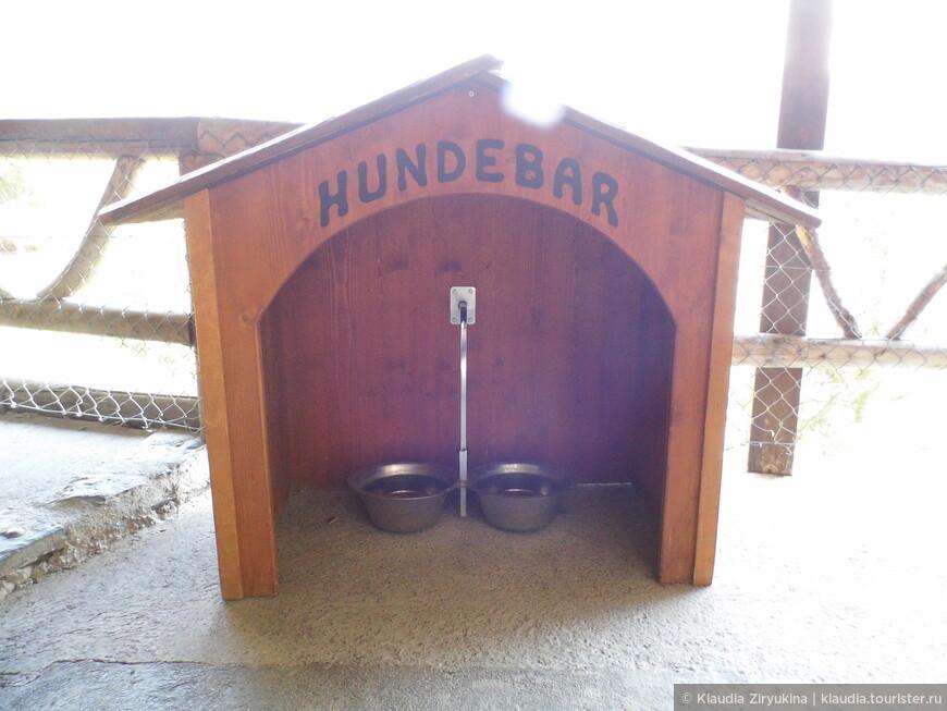 Ресторан для собак тоже в наличии.