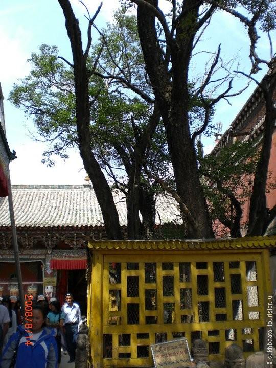 Когда родился в 1357 году Лама Зонхаба один капель кровь упал на землю, и вырос здесь святой дерево на листьях которого возник  изображение Будды. На дерево возник буквы из святой буддийских сутр. Чудо.