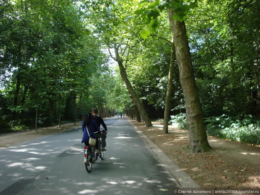 Двойной велосипед в Центральном королевском парке