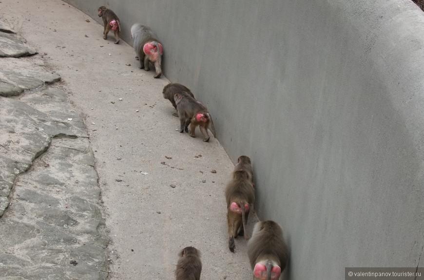 И вот так часами ходят по кругу бетонированного вольера, глядя друг другу в ... тыл