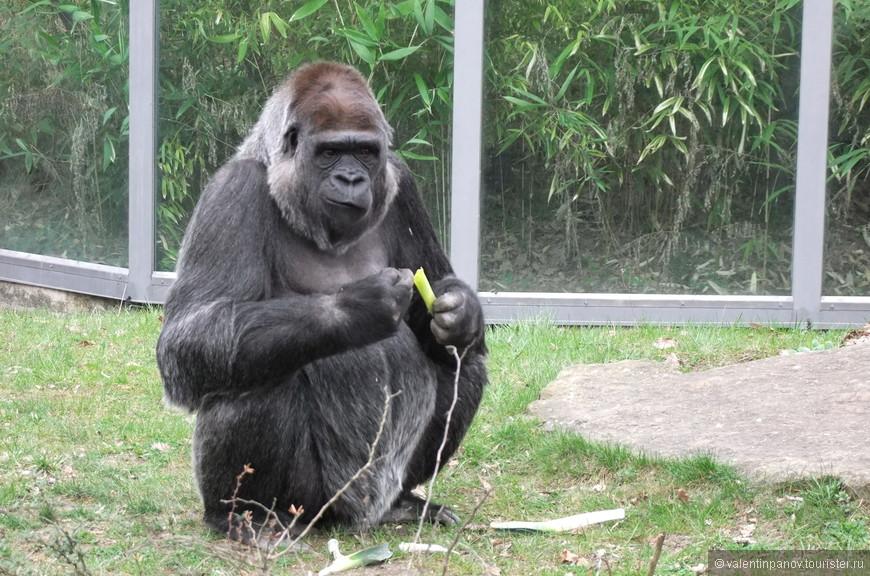Ах гады, всё-таки был бананчик! Жаль, что маленький! Зажались...
