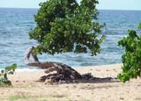 Пляж Caleton BLANCA - Сантьяго Де Куба