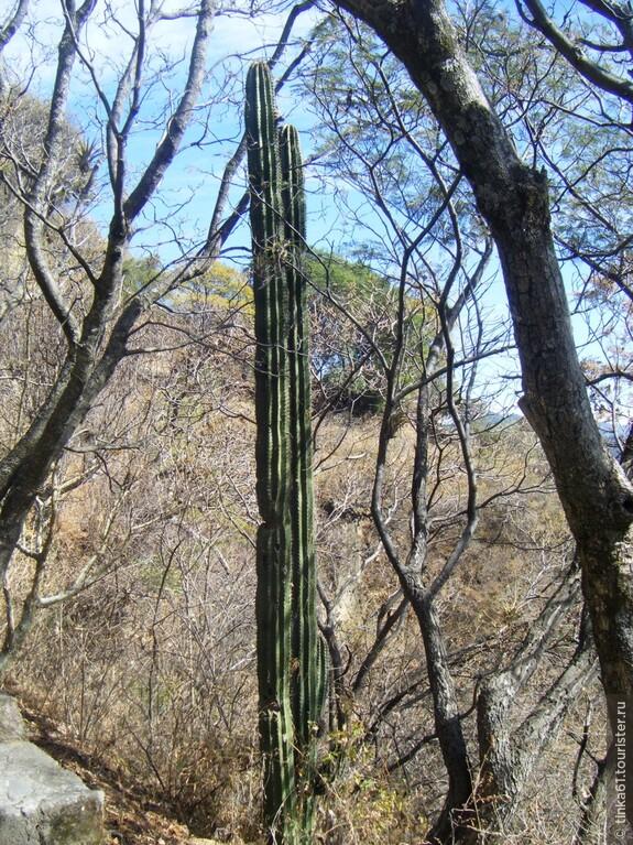FOTOS MEXICO 329.jpg