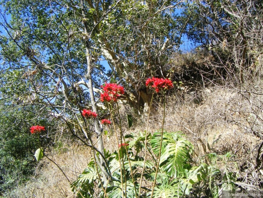 FOTOS MEXICO 358.jpg