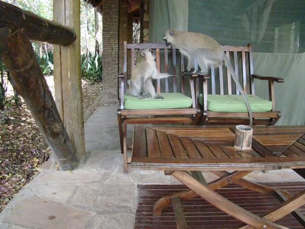 Кокосовый рай