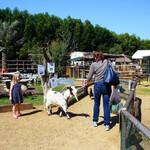 Зоопарк-ферма Petting Farm