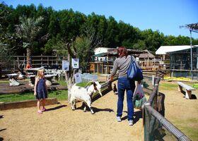 Зоопарк-ферма Posh Paws