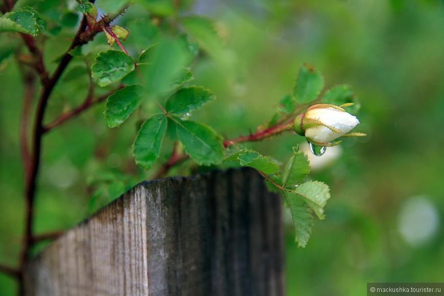 Запах свежести, зелени и цветов - вот что оказалось настоящим волшебством!