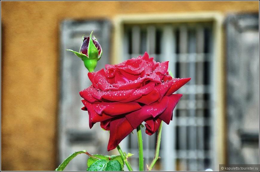 Климат в Сьоне сухой и мягкий. Дожди не часты, хотя нас вот угораздило... Сидя вечером за бокальчиком потрясающе вкусного местного вина, слушая звон тысяч цикад, ощущая аромат огромного количества сосен и роз, начинаешь ощущать себя человеком вселенной , поскольку  подобная картина и чувства уже были в моей жизни, в Италии, в Испании, Черногории, Греции...