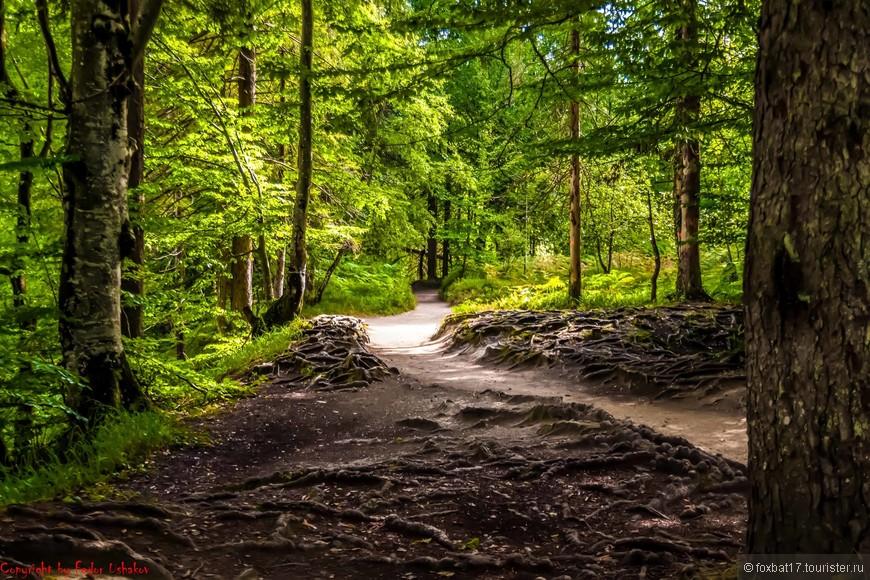 """А дорога, тем временем, идет в """"темный"""" лес."""