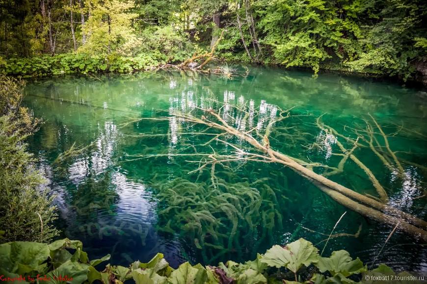 Или вот еще. Прозрачность воды не уменьшает наши удивления этим обстоятельством.
