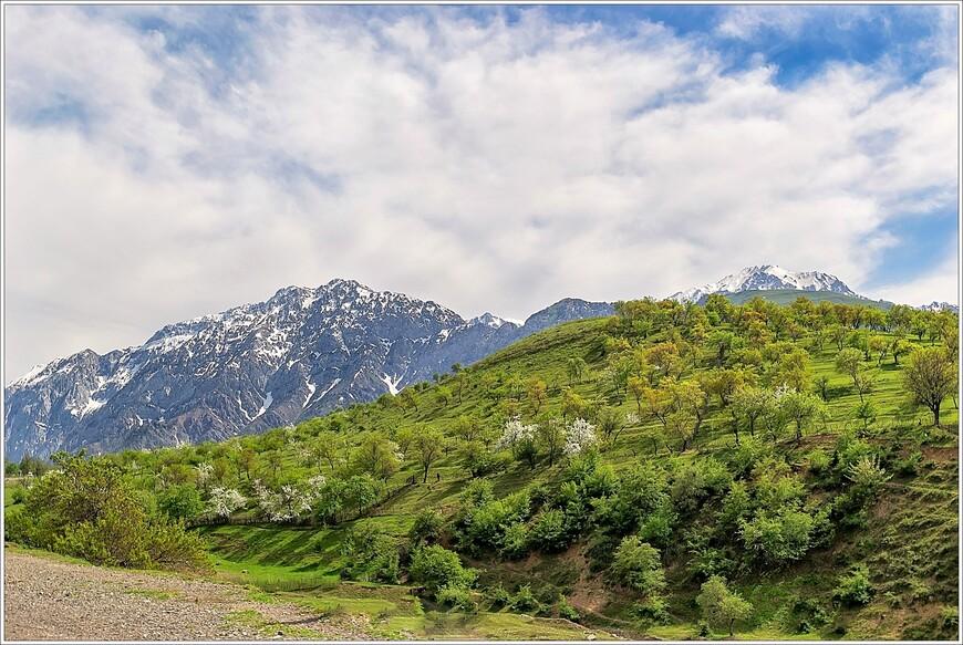 В горах сады ещё цветут,в отличие от города.