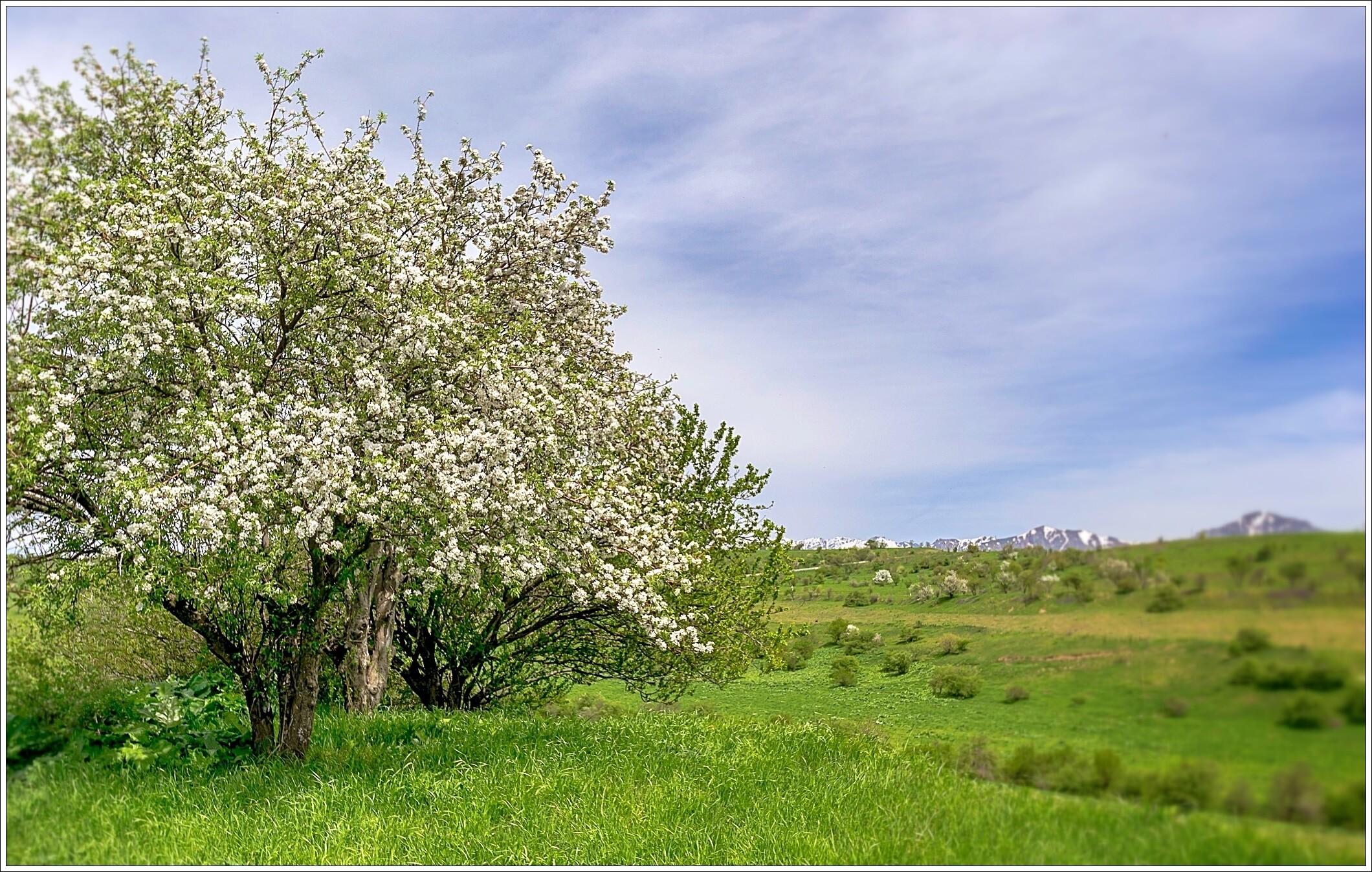 Весна!, По Чарвакскому кольцу