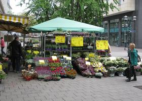 Многообразие цветов.