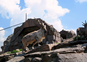 Московскому зоопарку 150 лет...