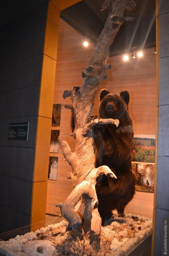 Чучело медведя. Вообще финны, как и русские, всегда относились к медведям с уважением.