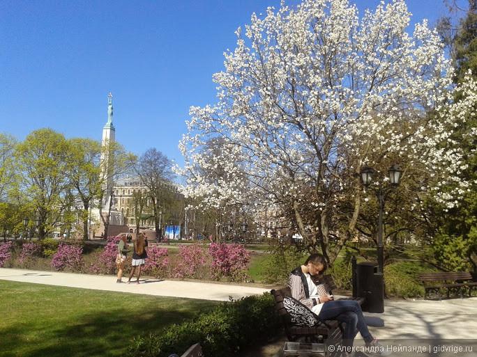 Весна в Риге. Цветение магнолии в сквере Национальной оперы.