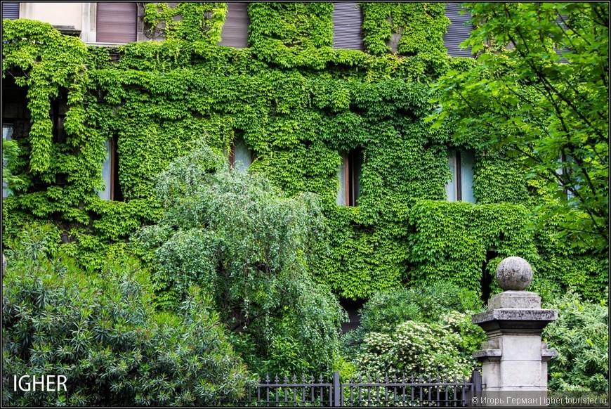 зелени даже зимой достаточно
