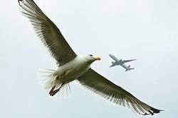 Самолет «Уральских авиалиний» экстренно сел в Праге