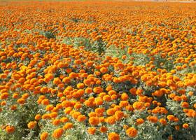 Феникс-парк цветов