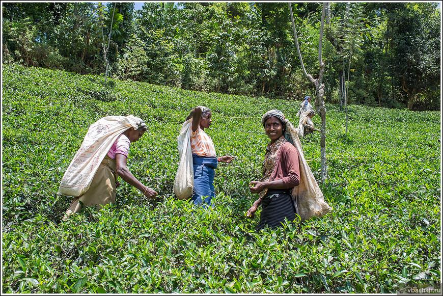 srilanka_4075.jpg