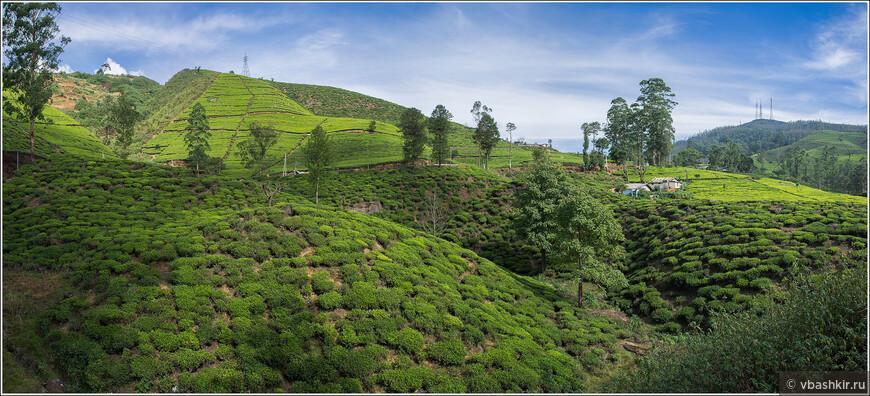 srilanka_4199p.jpg