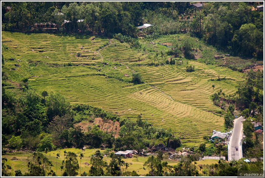 srilanka_4390.jpg