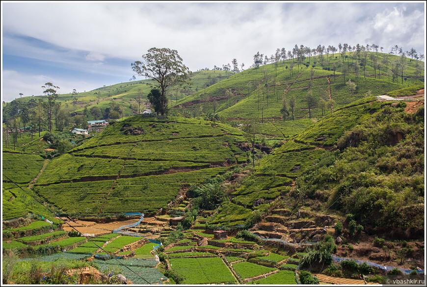 srilanka_4427.jpg