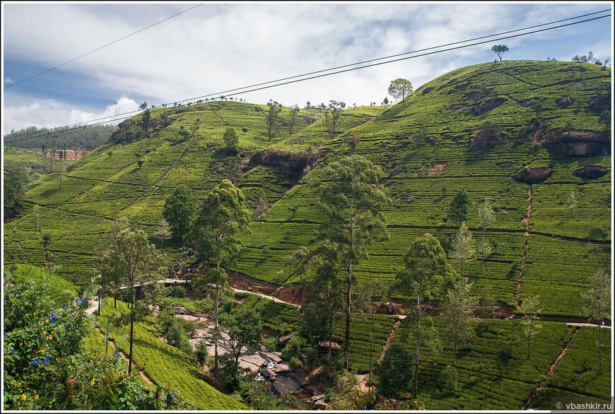 srilanka_4458.jpg