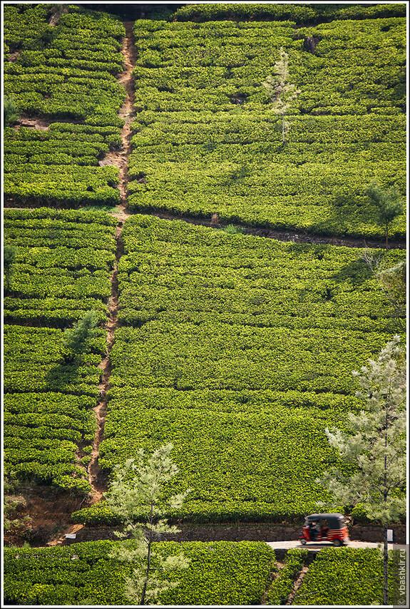 srilanka_4479.jpg