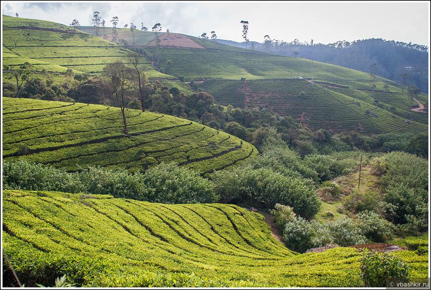 srilanka_4510.jpg
