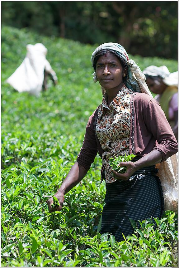 srilanka_4626.jpg