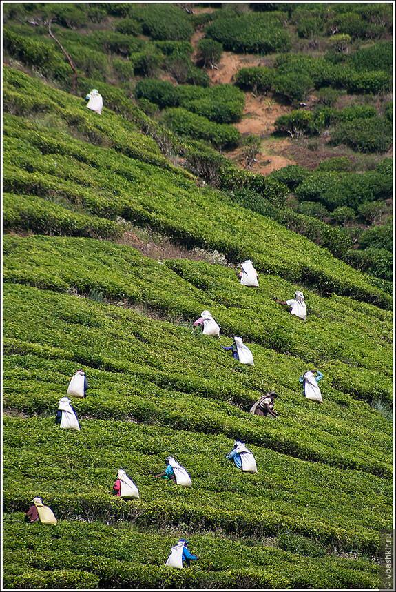 srilanka_4651.jpg