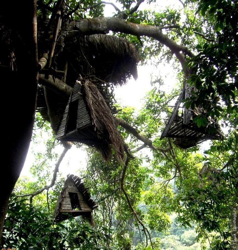 дом на дереве, защита от злых животных.