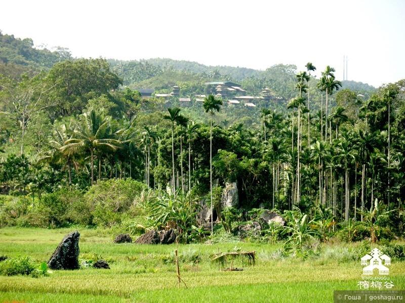 плантация  Пинлана
