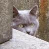 Котик кладбища Мотнтмартра.