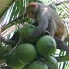 мой любимый кокос.