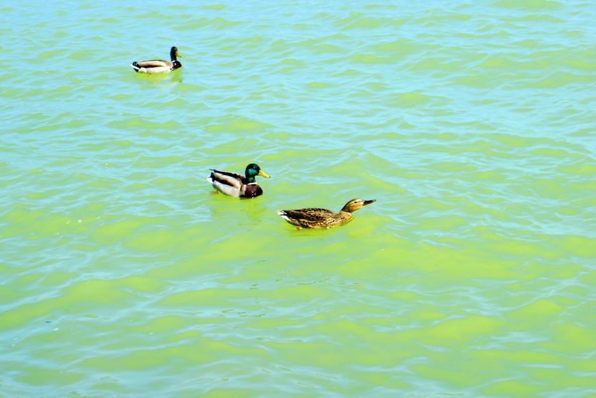 Вода в озере зеленоватая, здесь это особенно хорошо видно.