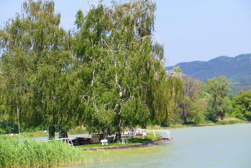 Такие вот берега озера, поросшие камышом и березами
