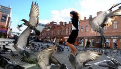 В Вене граждан будут штрафовать на 36 евро за кормление голубей