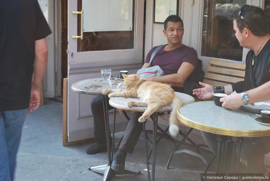 Очень забавно,  кот на столике в одном из кафе Парижа